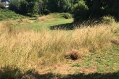 golf-13-big